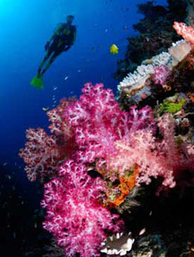 Scuba diving with Scuba Addicts Dive Centre, Ao Nang